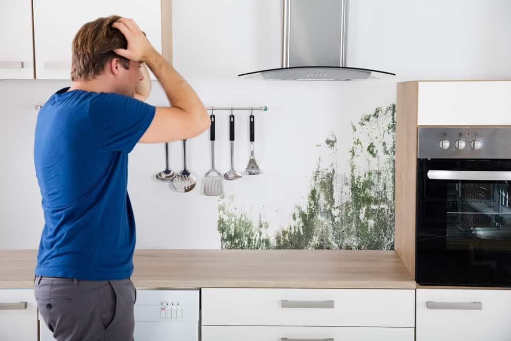 הסרת עובש במטבחים